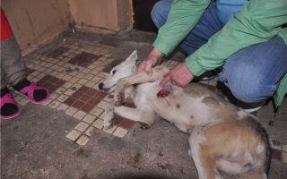 Чем закончились мучения собаки от жестоких хозяев