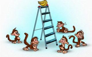 Формирование общества: эксперимент с обезьянами