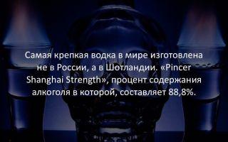 Самые невероятные факты в мире