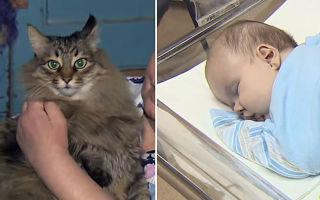 Кошка спасла ребенку жизнь – необыкновенный случай