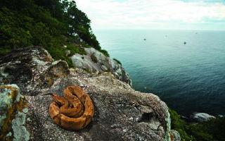 Змеиный остров – самое опасное место