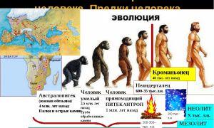 Эволюция человека – древний человек и этапы развития