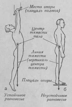 Роль мозжечка в регуляции положения тела и движении.
